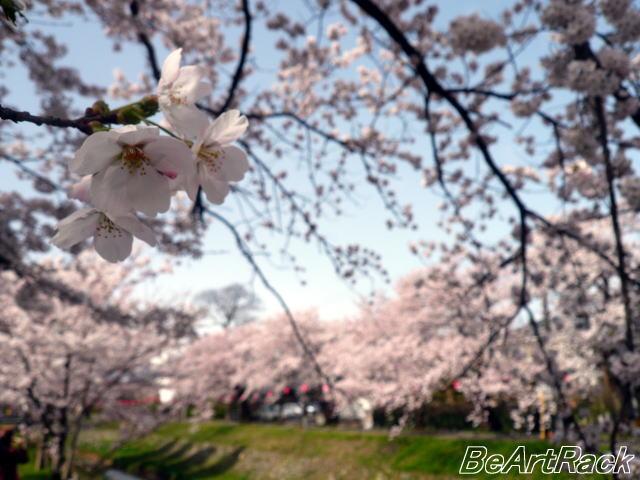 2010(平成22)年4月13日(火) 花見 P1090969.JPG