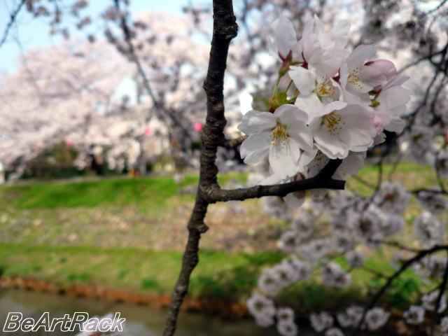 2010(平成22)年4月13日(火) 花見 P1090971.JPG
