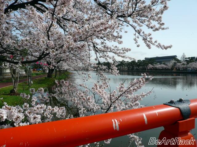 2010(平成22)年4月13日(火) 花見 P1090973.JPG