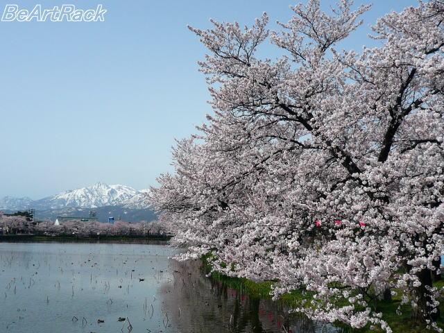 2010(平成22)年4月13日(火) 花見 P1090974.JPG