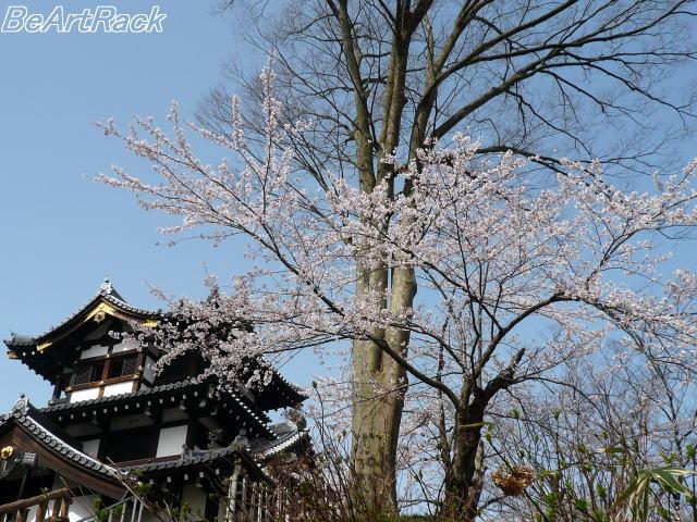 2010(平成22)年4月13日(火) 花見 P1090979.JPG