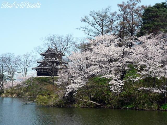 2010(平成22)年4月13日(火) 花見 P1090980.JPG