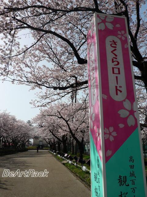 2010(平成22)年4月13日(火) 花見 P1090981.JPG