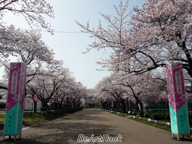 2010(平成22)年4月13日(火) 花見 P1090982.JPG