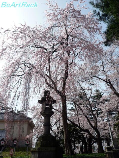 2010(平成22)年4月13日(火) 花見 P1090984.JPG