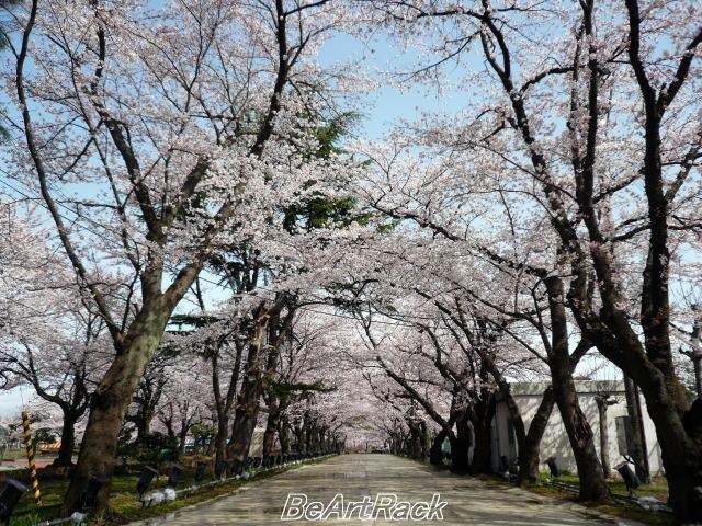 2010(平成22)年4月13日(火) 花見 P1090987.JPG