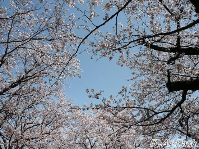 2010(平成22)年4月13日(火) 花見 P1090988.JPG