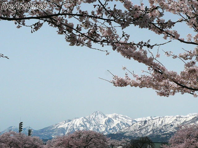 2010(平成22)年4月13日(火) 花見 P1090990.JPG