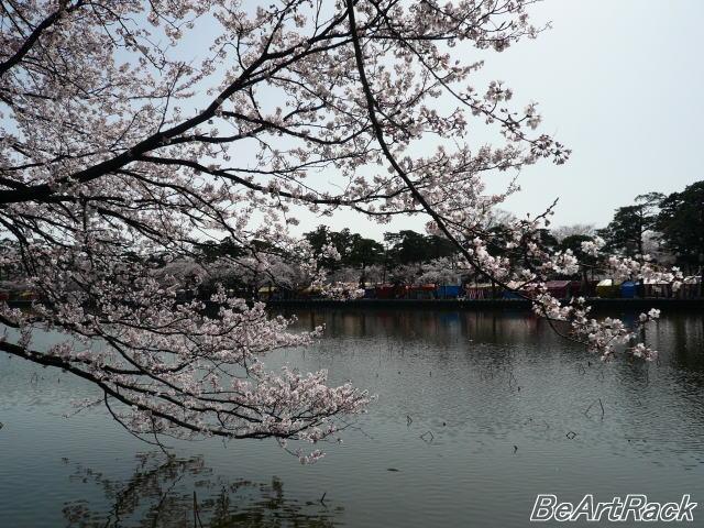 2010(平成22)年4月13日(火) 花見 P1090991.JPG