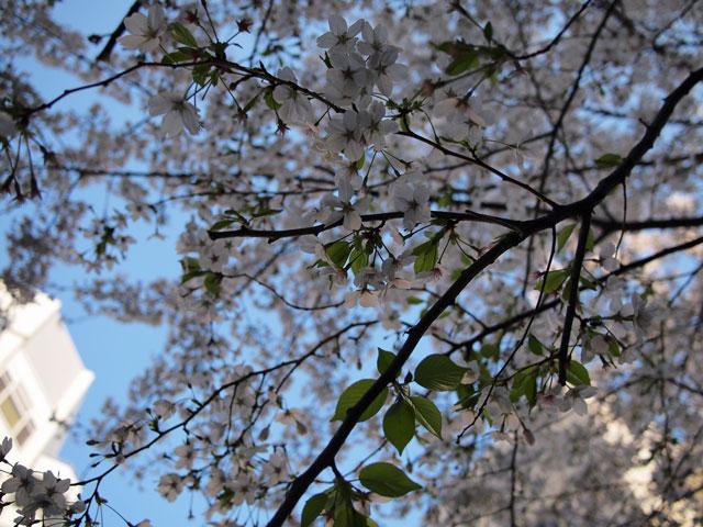 2011.4.22(金) P4120368.jpg